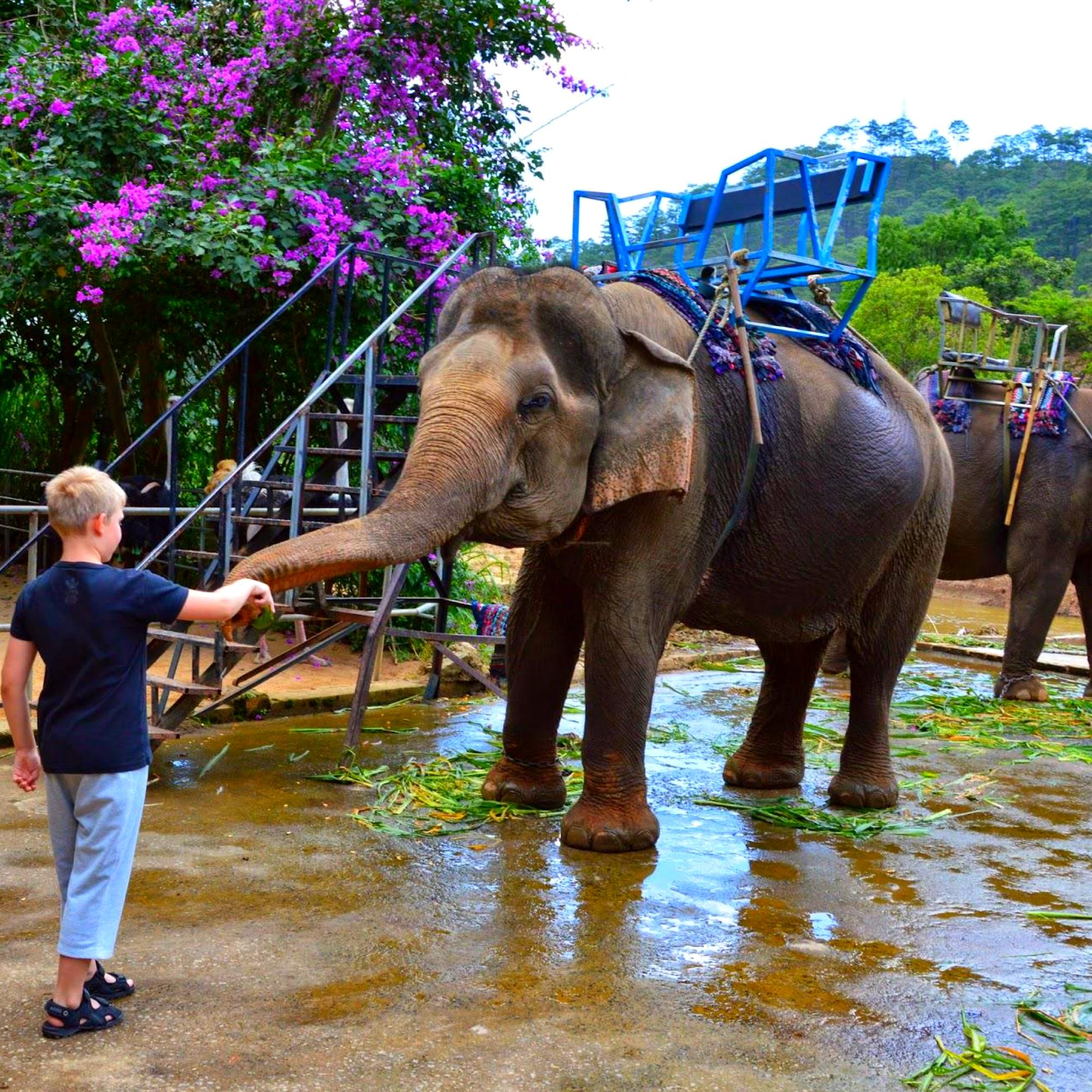Экскурсия к слонам из Муйне. Приглашаем вас в Далат - город любви и цветов